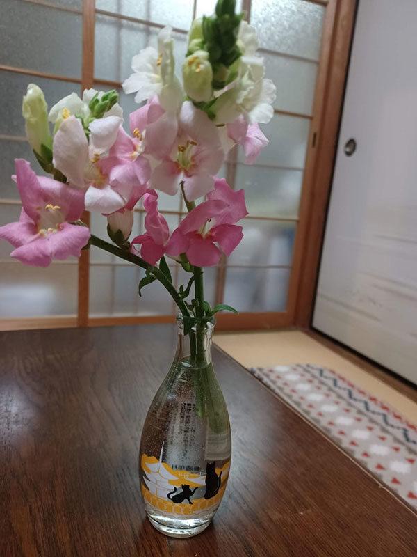 純米吟醸 瀬戸内ネコの散歩道_3