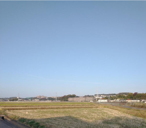 image1_rice